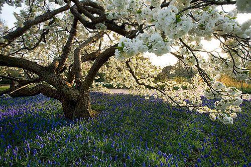 36413 Flowering Trees Garden Trees Plant Maintenance