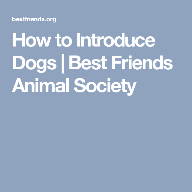 How To Introduce Dogs Best Friends Animal Society Rescue Dogs Animal Shelter Fundraiser Puppy Mill Rescue