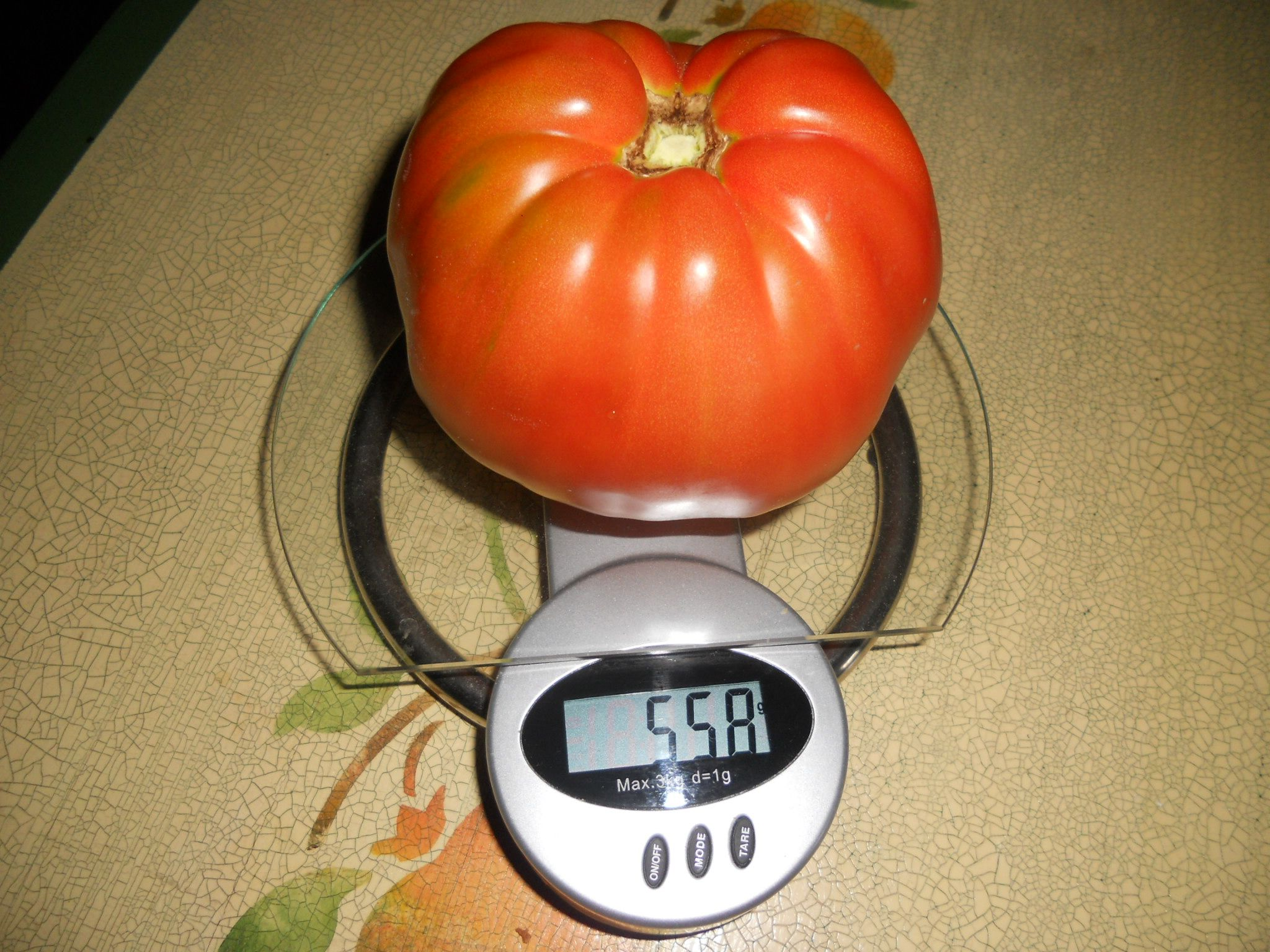 the huge tomatoe (558 gr)