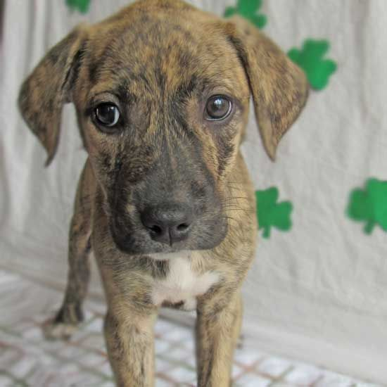 Pin On Adopt A Dog Or Puppy