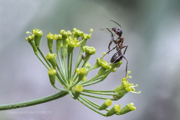 Из жизни муравьев )) by superstaray. @go4fotos