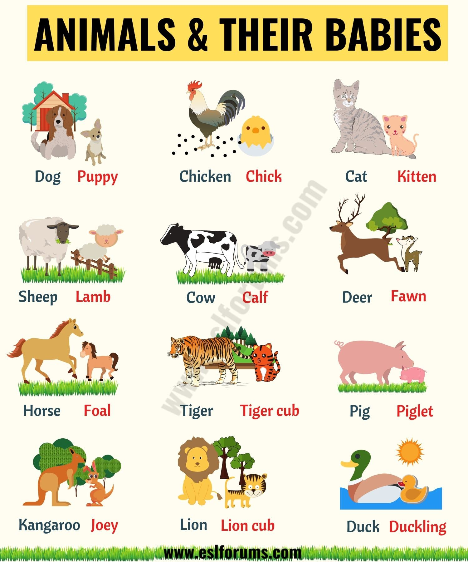 List Of Animals A Big Lesson Of Animal Names With The