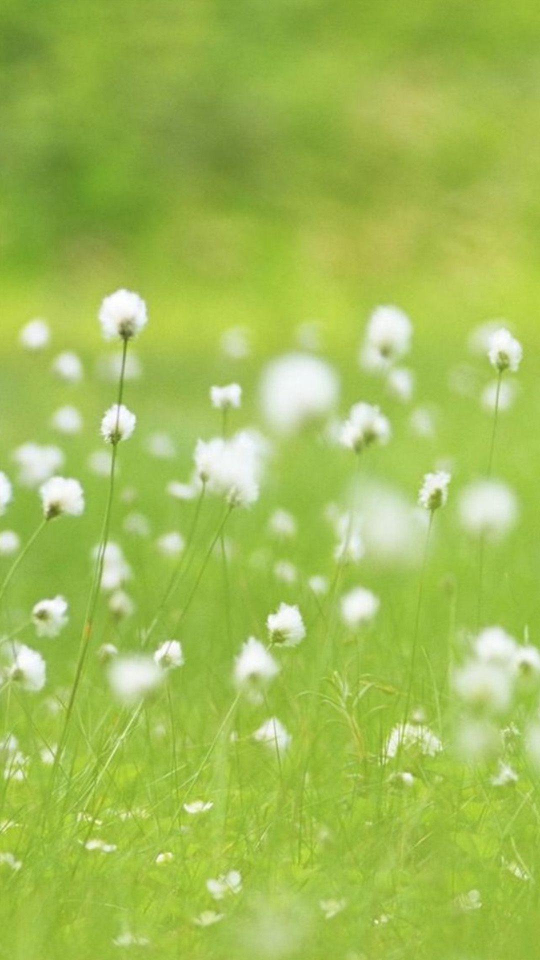 Vitality White Dandelion Plant Field iPhone 6 wallpaper