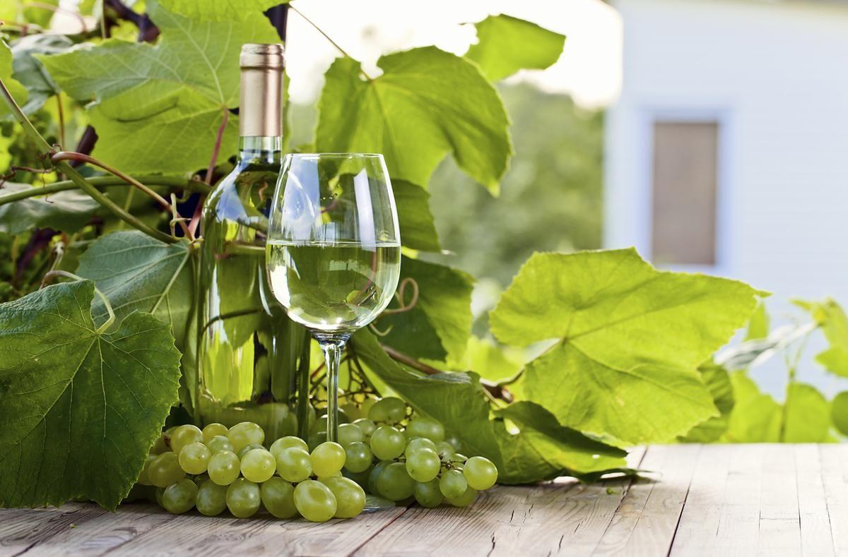 Green grape and white wine in vineyard   White wine grapes ...