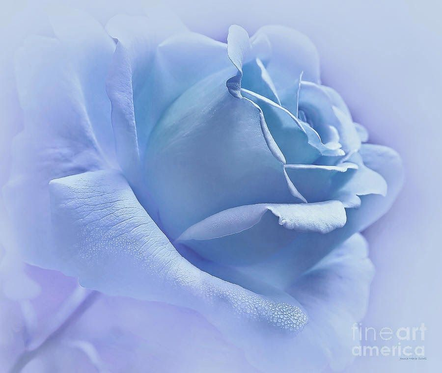 Blue Roses Hd Wallpapers Free Download Blue Flower Painting Light Blue Roses Blue Roses Wallpaper