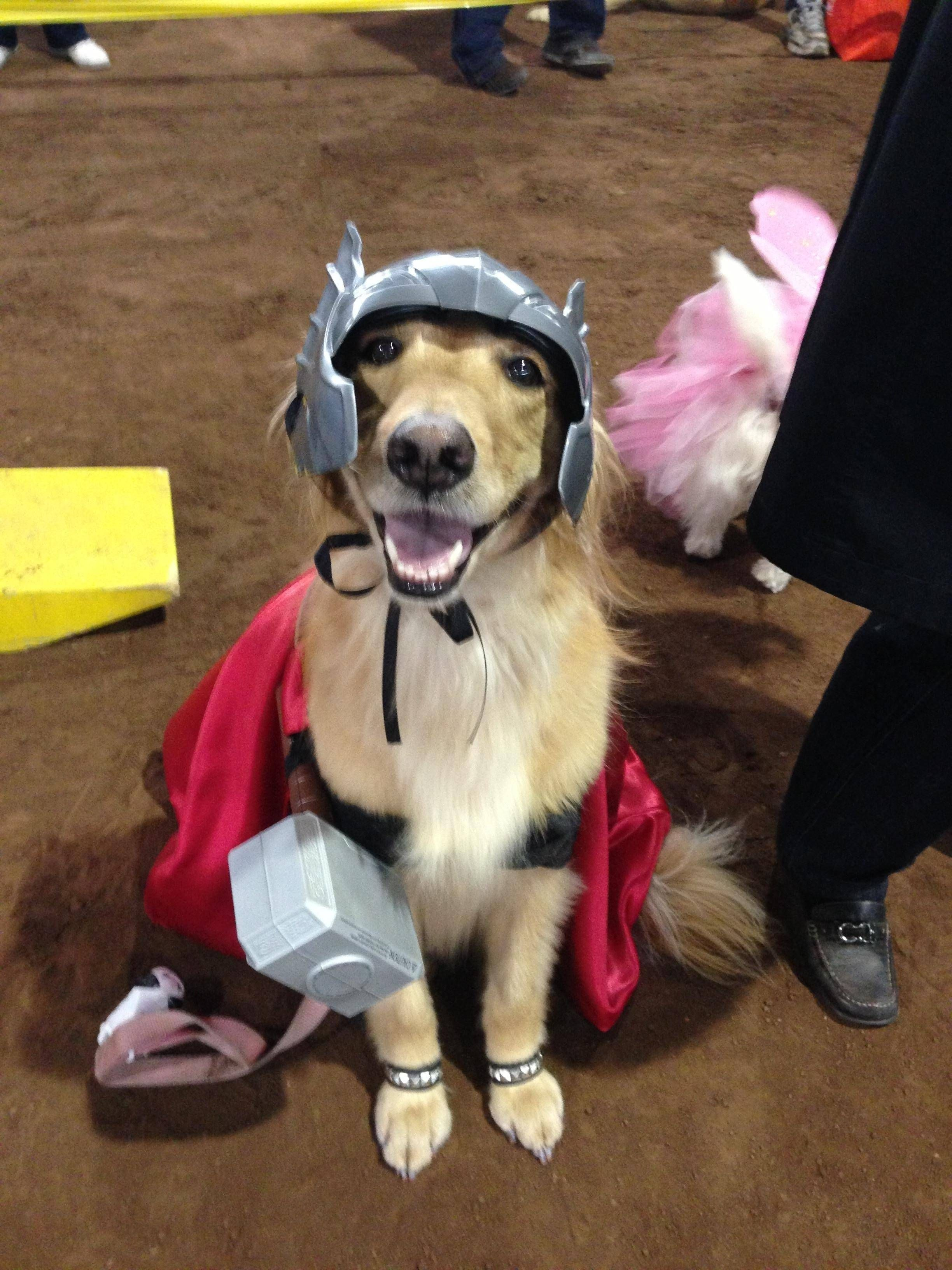 Pin By Carrie Connor On Cute Awesome Funny Pet Costumes Dog