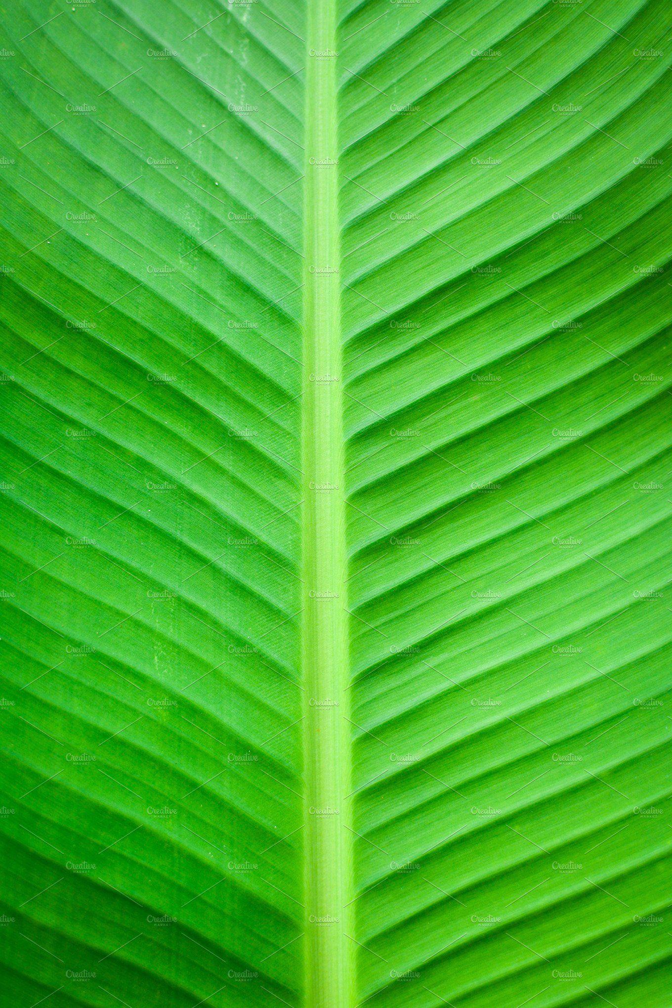 Banana Leaf Background Leaf Background Banana Leaf Background