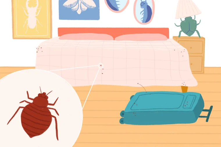 Where Do Bed Bugs Come From? A Quick, NonGross Explainer