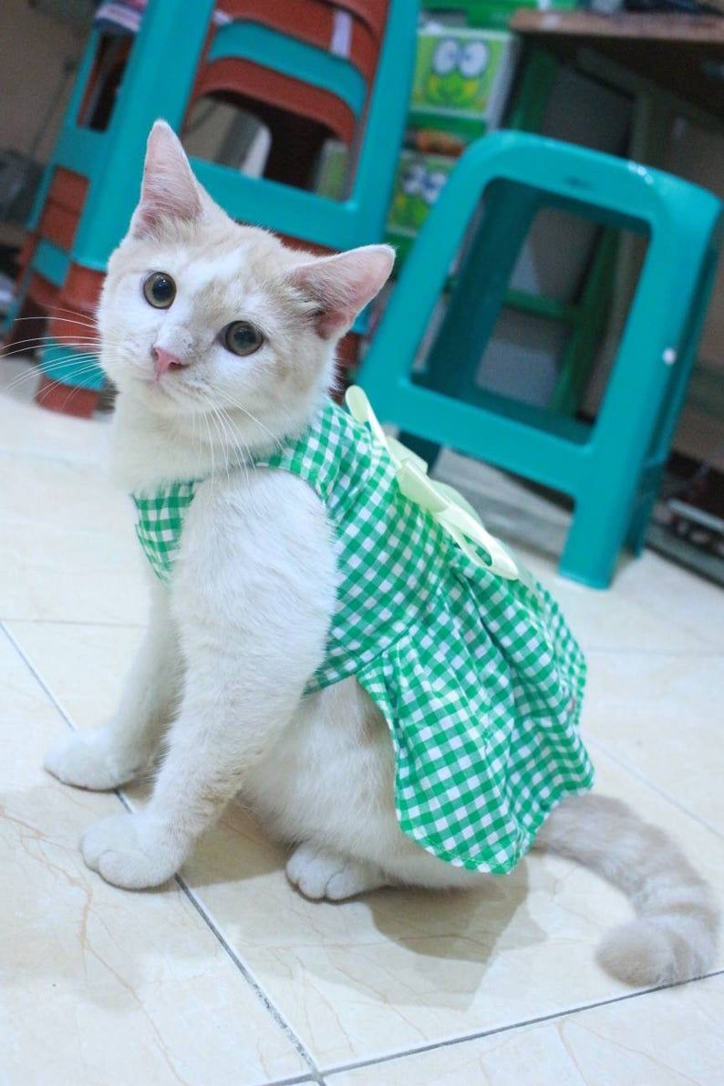 Dress With Green Square Motive For Cat And Dog Persian Outfit Etsy In 2020 Cat Clothes Pet Costumes Cat Kitten Clothes