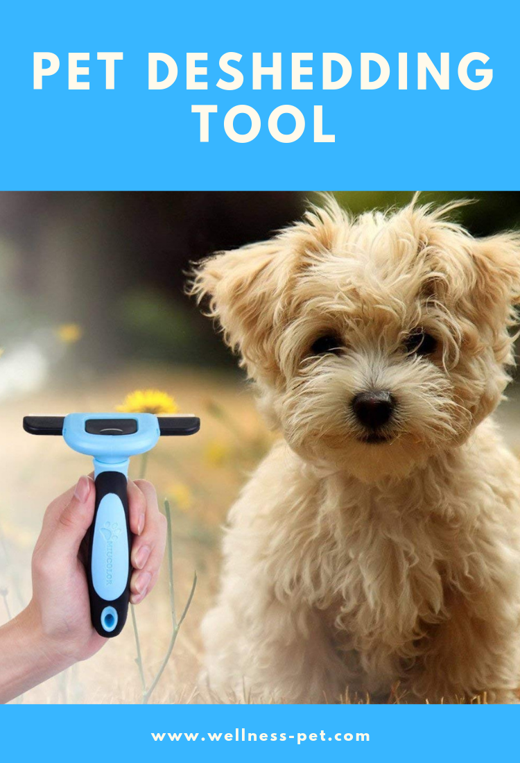 Non shedding dogs. Grooming Brush For Dogs And Cats