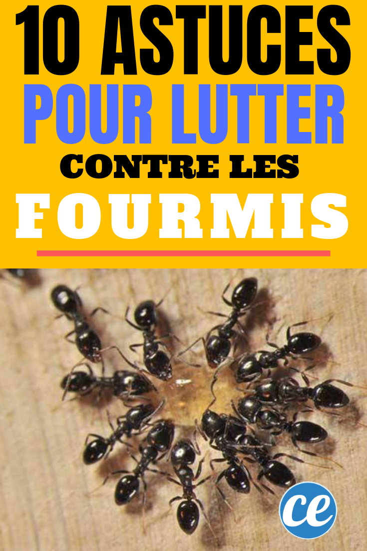 Astuces Naturelles Pour Se Débarrasser Des Fourmis 10 astuces naturelles pour lutter contre les fourmis. | anti