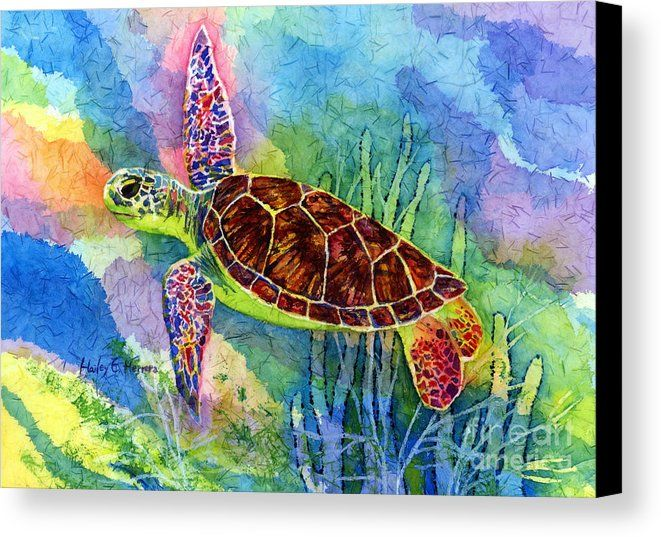 Sea Turtle Canvas Print Canvas Art By Hailey E Herrera Sea