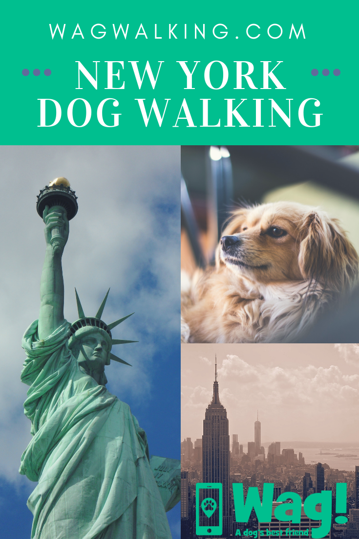 Dog Walkers in New York, NY - Dog Walking Near You | Dog ...