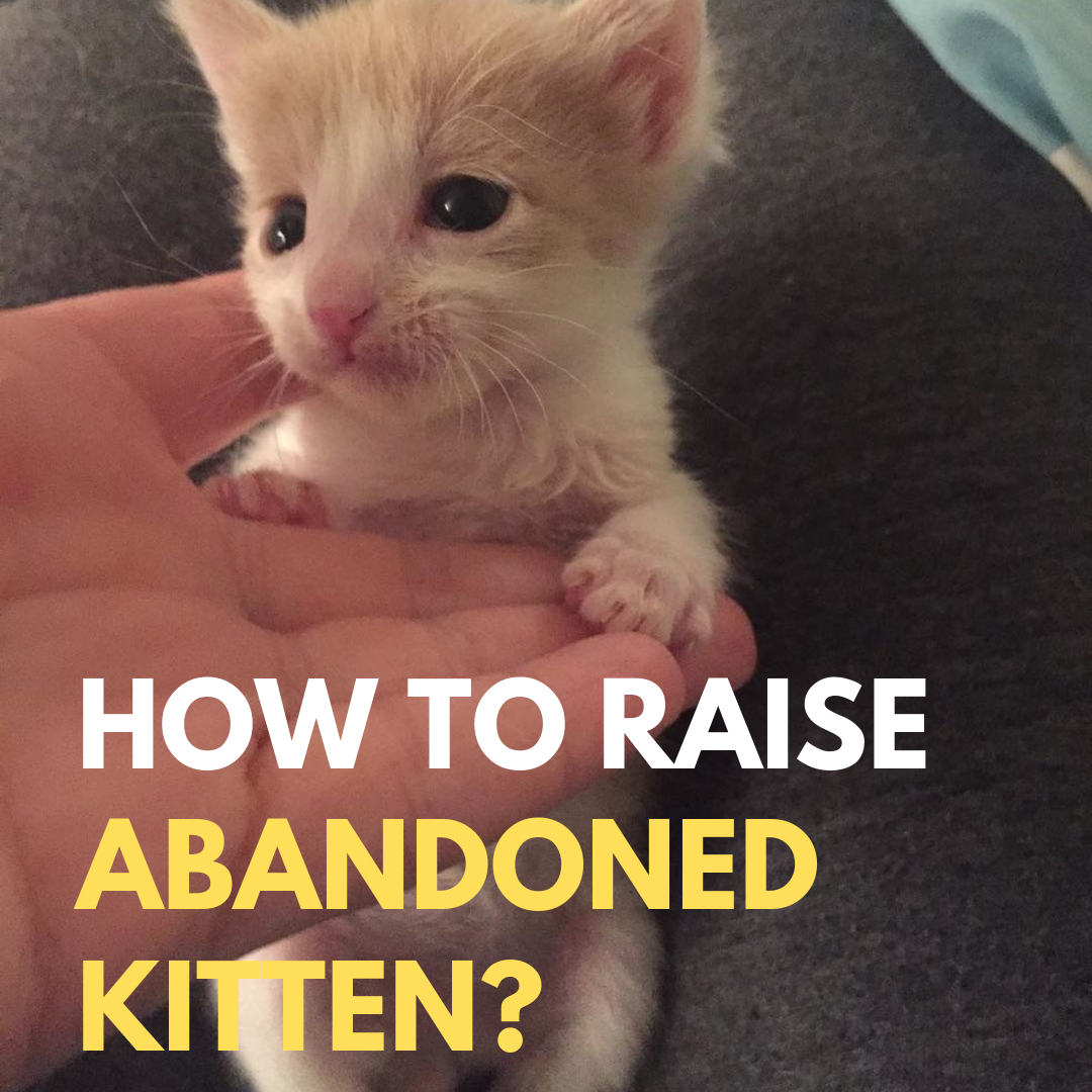 How To Take Care Of Abandoned Kittens Kitten Care Kitten Rescue Taking Care Of Kittens