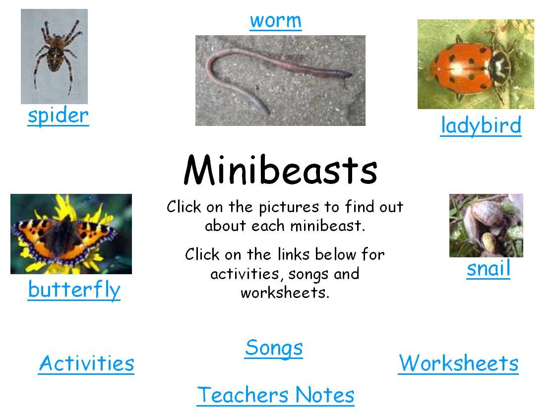 A Study Of Minibeasts Using Powerpoint And Smart Notebook And Worksheets