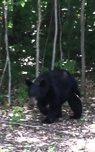 Share Your Photos And Videos Wwtv Traverse City Black Bear Michigan