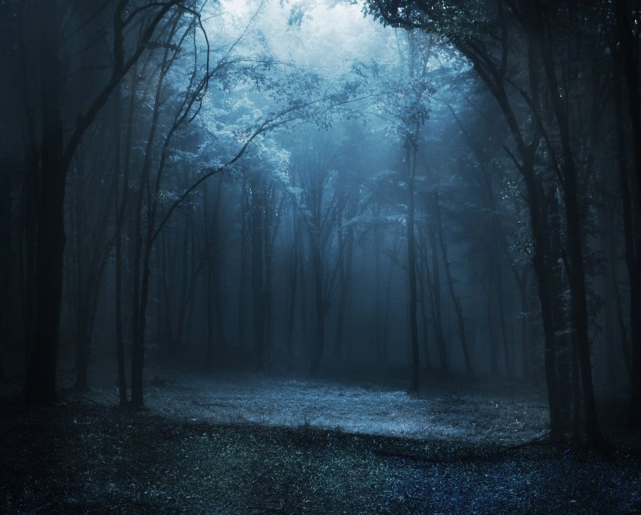Blue Fairy Forest