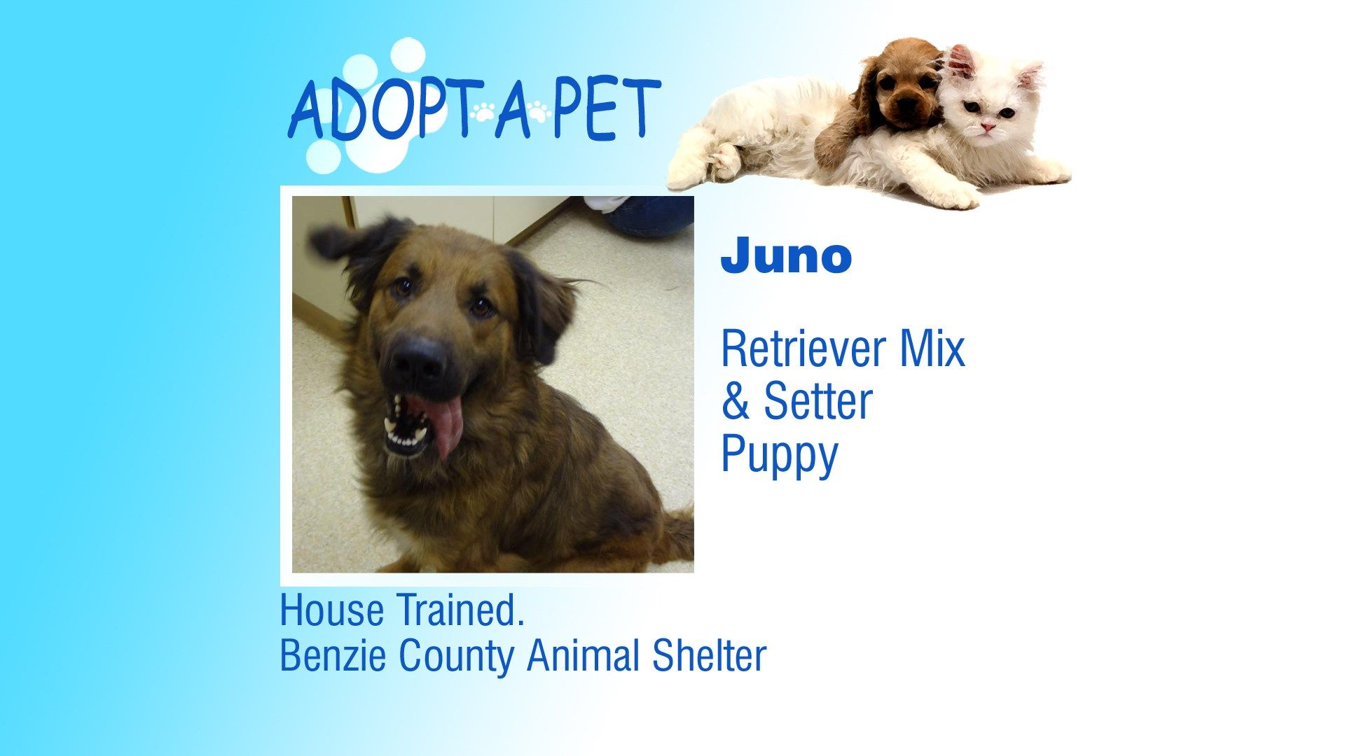 Adopt A Pet Aspen Toodeloo Juno Northern Michigan S News