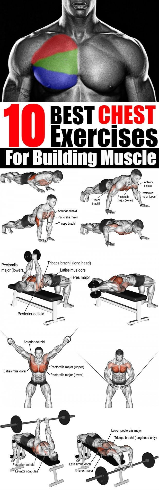 10 Best Chest Exercises For Building Muscle Best chest