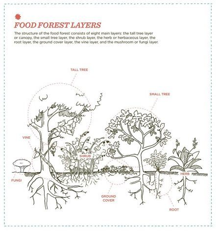 how to create a permaculture food forest