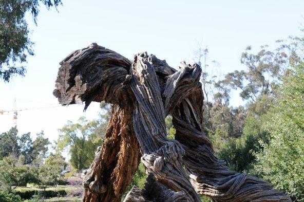 Creepy Cool Tree- Balboa... San Diego, CA
