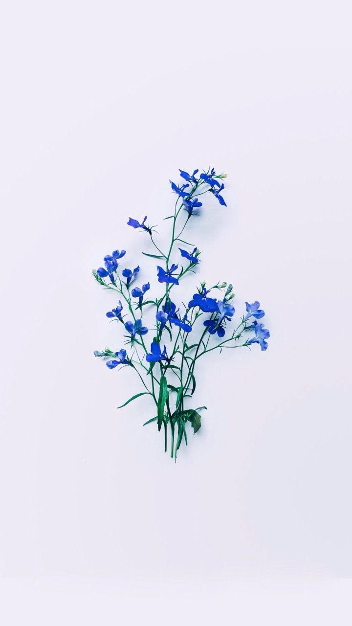 Ciralism Blue Flower Wallpaper Ravenclaw Aesthetic Blue Aesthetic