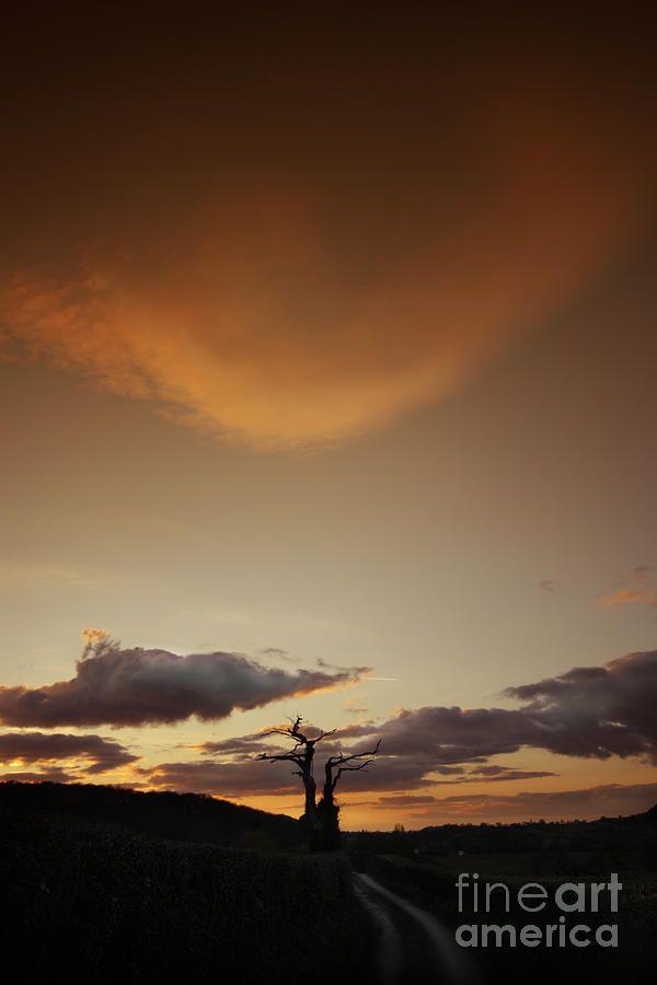 Photograph - Bonsai by Angel Ciesniarska #affiliate , #Sponsored, #SPONSORED, #Bonsai, #Angel, #Ciesniarska, #Photograph