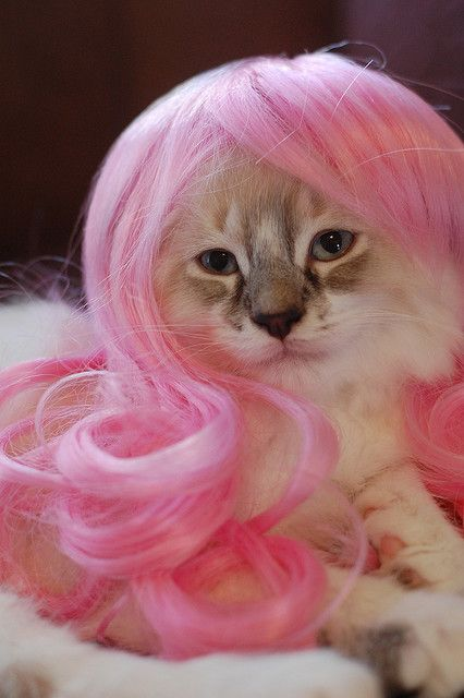 Kitty Manaj!! Barnes and Nobles has a whole book in the humor section dedicated to cat's with wigs on....its hilarious월드카지노스쿨♥PiNK14.COM♥파라다이스그랜드카지노♥PiNK14.COM♥롯데호텔카지노