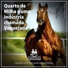 Resultado De Imagem Para Imagens De Cavalos De Vaquejada Com Frases