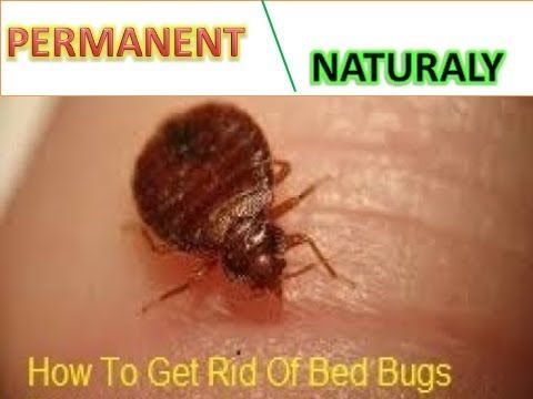 How To Get Rid Of Bed Bugs Naturally…
