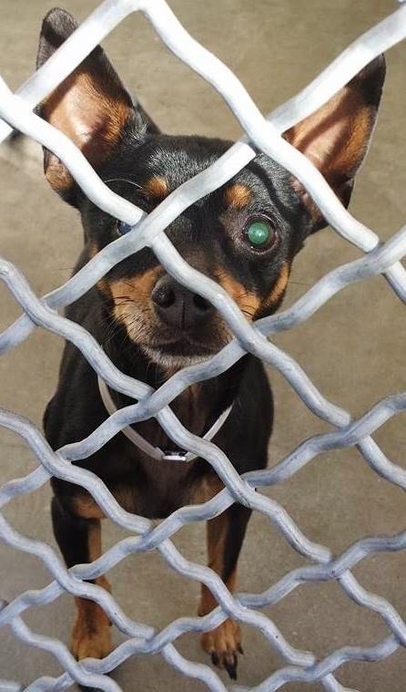 Pin Von Tanja Schriefer Auf Saving Carson Shelter Dogs Erste Hilfe