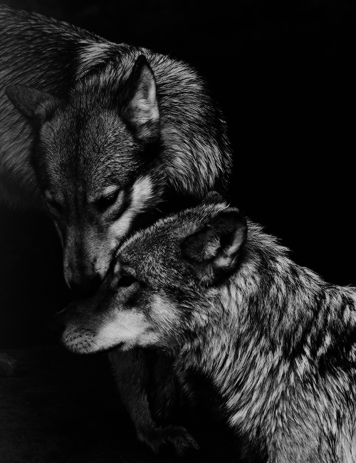 Pin di cristina su lupi pinterest e for Ardeatina arredamenti di lupi gabriella