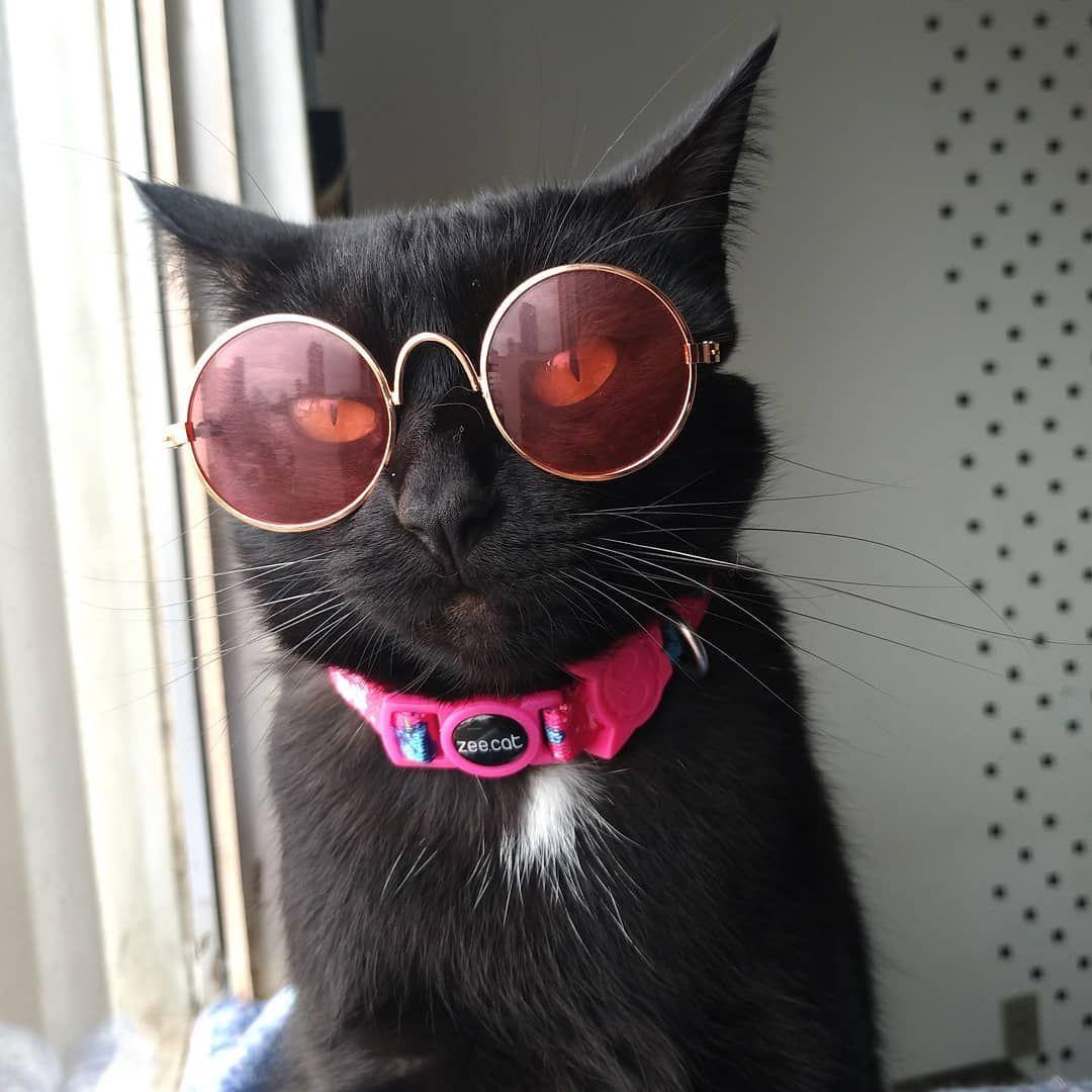 Gatinha de óculos 10% de desconto com cupom GATOMIU na zeedog! gatos oculos  estilo desconto cute lovely cats catlovers 9bbaba6d41