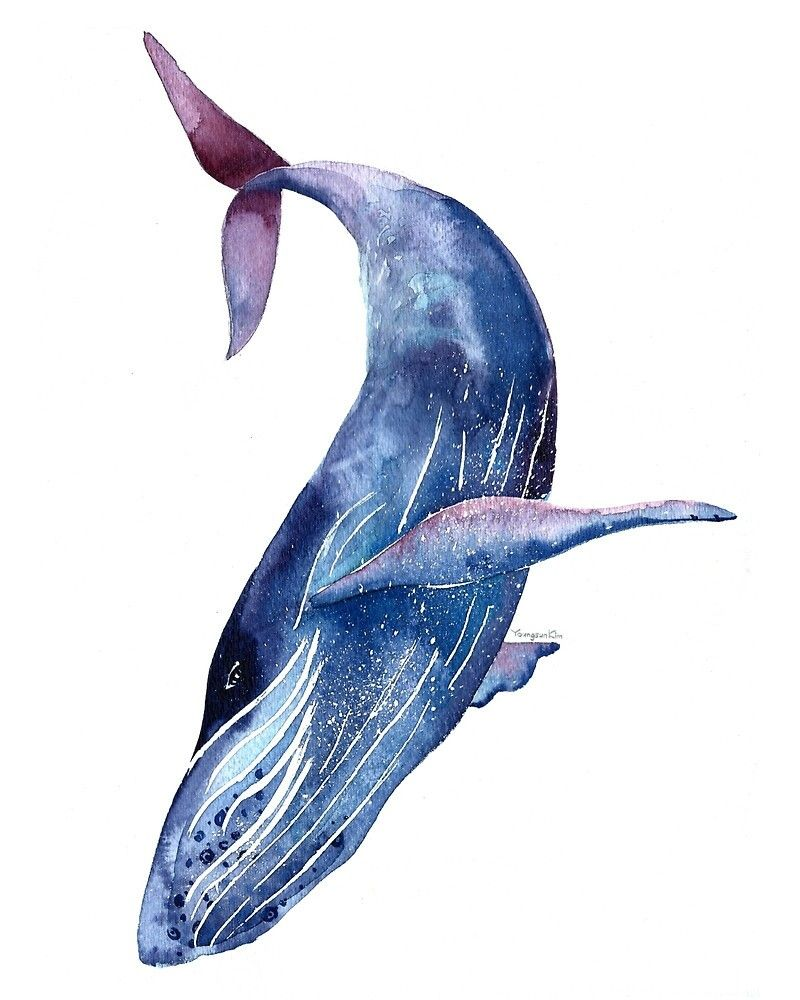 Pin by gu chen on watercolor pinterest aquarelle art and dessin - Baleine dessin ...