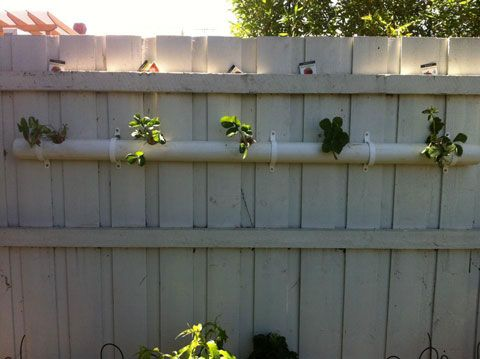 Pvc Pipe Strawberry Planter For Vertical Gardening