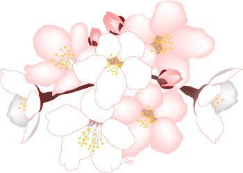 Cherry Tree Blossoms Flower Clip Art Cherry Blossom Clip Art Flower Clipart Blossom Flower