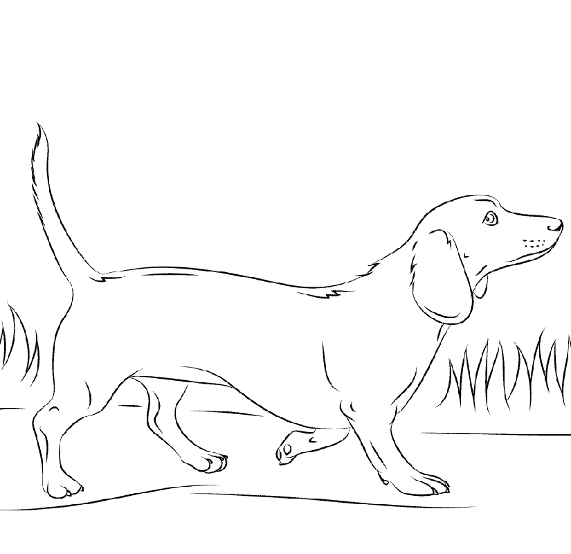 Dachshund Coloring Pages To Print Dog Coloring Book Puppy Coloring Pages Dog Coloring Page