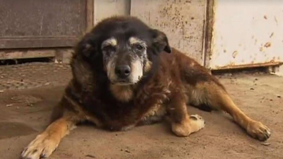 Picture Of The Oldest Dog In The World