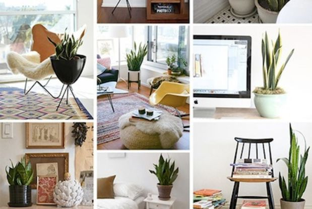 awkward small space design - Google Search Indoor Plants
