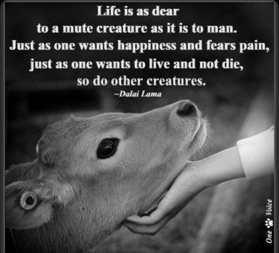 Pin By Amanda Mitchell Fonza On Fur Babies Animal Quotes Animal Rights Animals