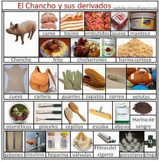 Derivados Del Chancho O Cerdo Rayito De Colores School Food Education