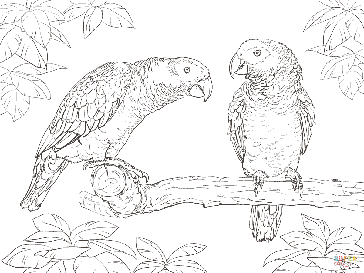 Two African Grey Parrots Coloring Page Free Printable Coloring Pages African Grey Parrot Bird Coloring Pages Animal Coloring Pages