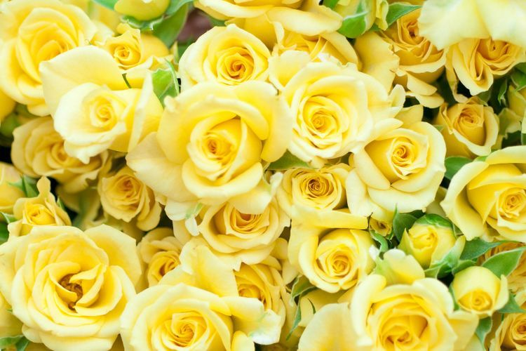 Gambar Buket Bunga Mawar Kuning Di 2020 Bunga Mawar Kuning Mawar