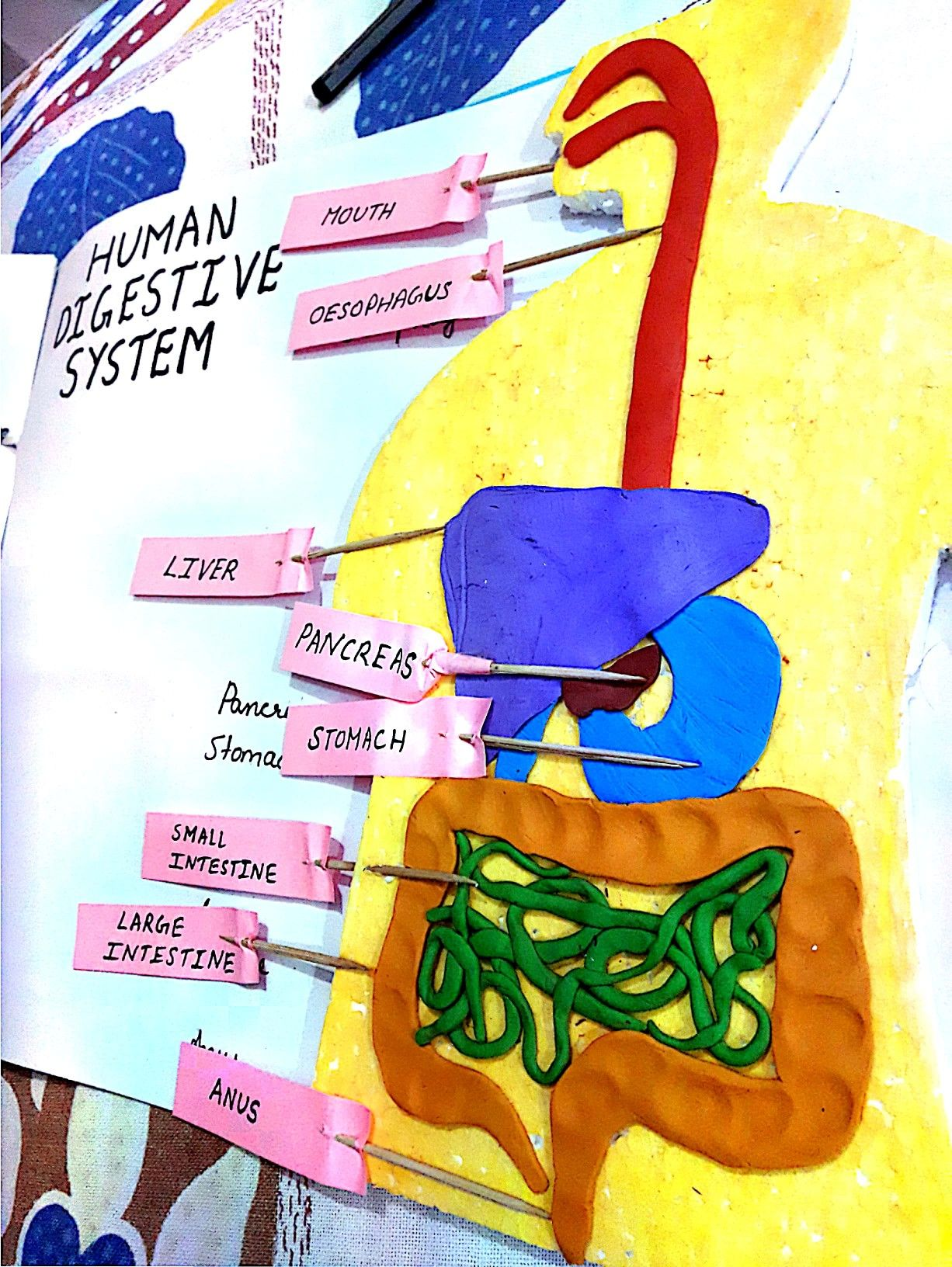 3d Human Digestive System Scienceproject Ideas Clay Model