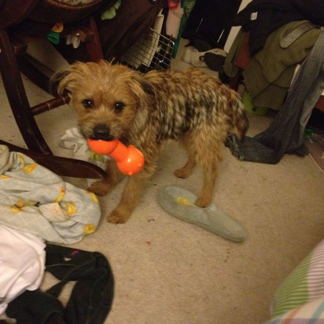 I Got A Toy What Of It It S Mine You Can T Have It Stop