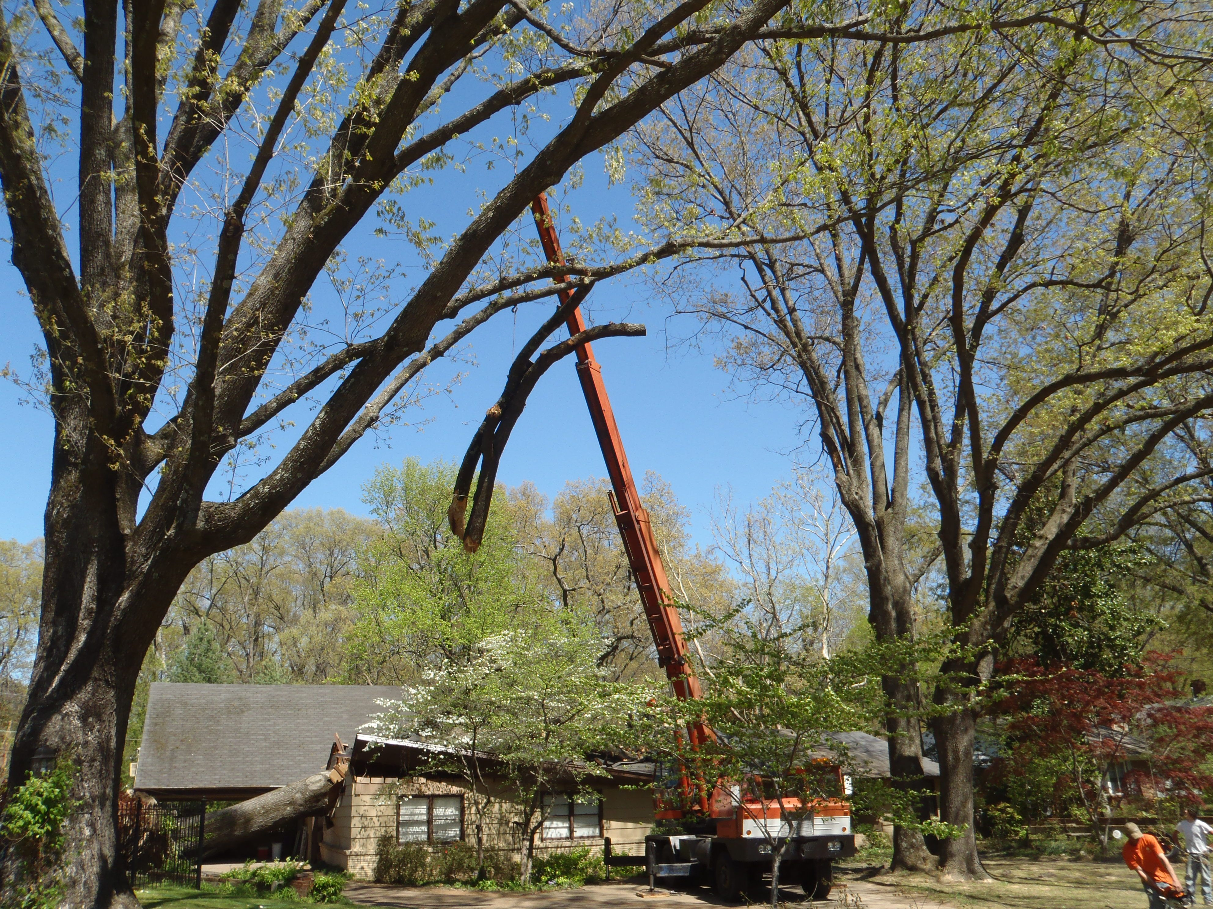 Removal of the old oak tree from the roof of my house