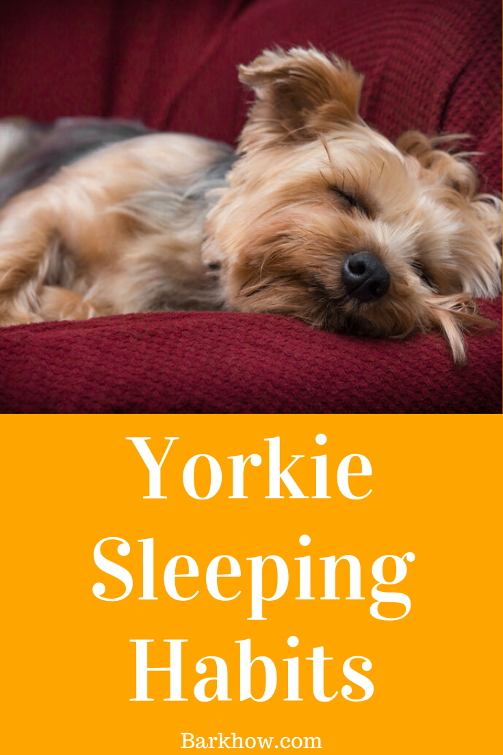 How much do Yorkies sleep Yorkshire Terrier sleeping