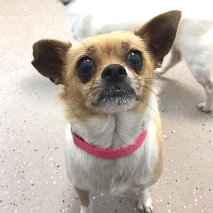 Daisy is available for adoption at our Mission campus