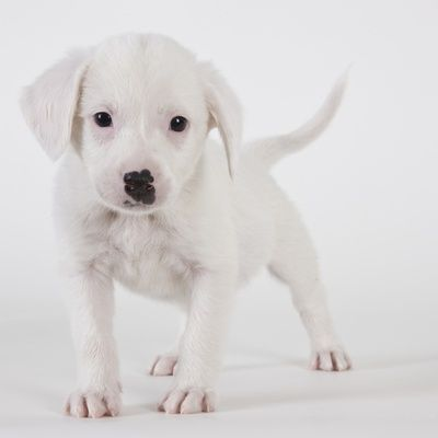 Pitbull Puppy Super Cute Dogs Cute Dog Pictures Puppy Facts