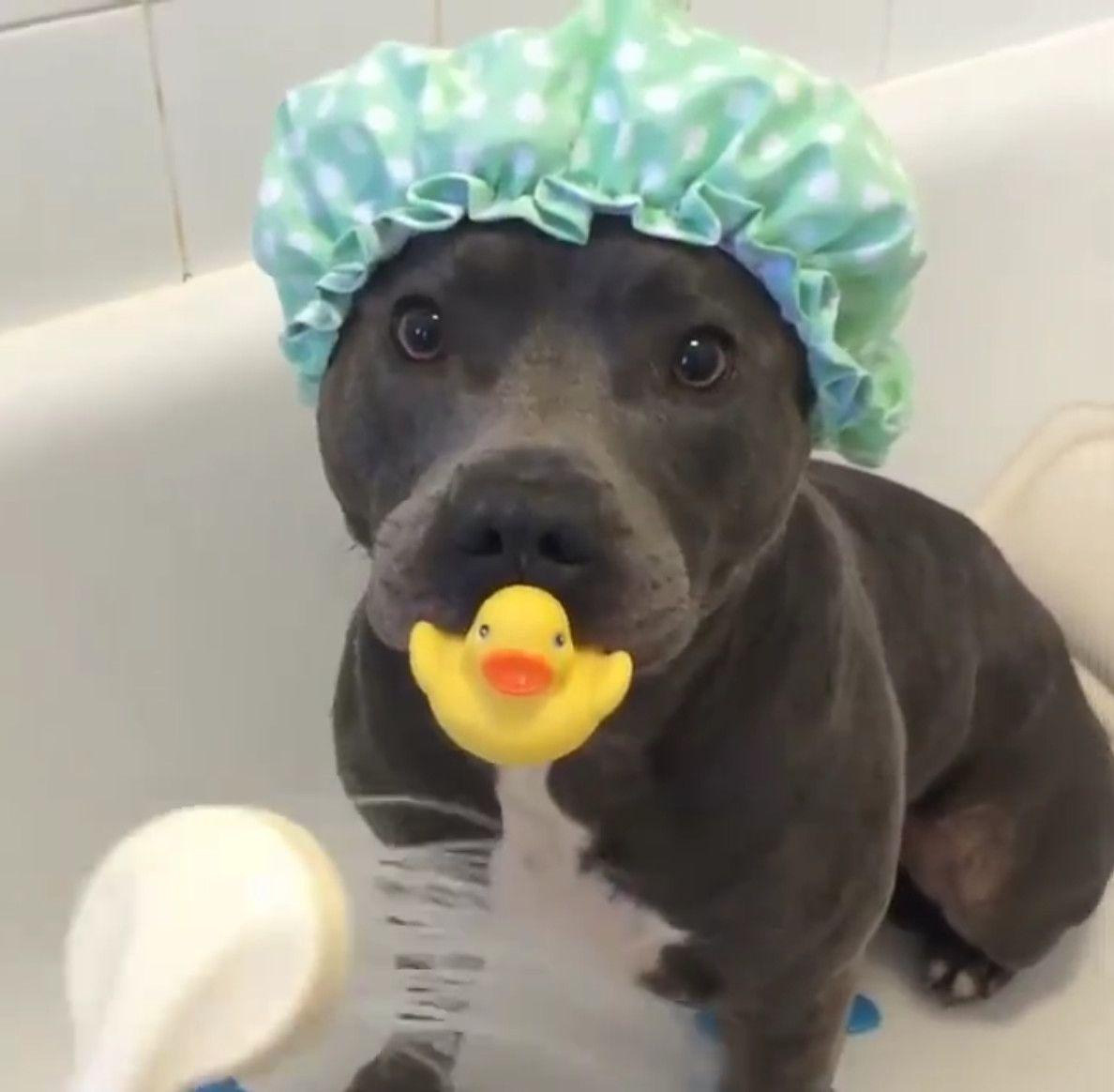 """Virales Video """"Hund im süßen Baby-Outfit in der Badewanne ..."""